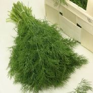 Dill Common - Anethum Graveolens - 25 grams - Bulk Discounts available